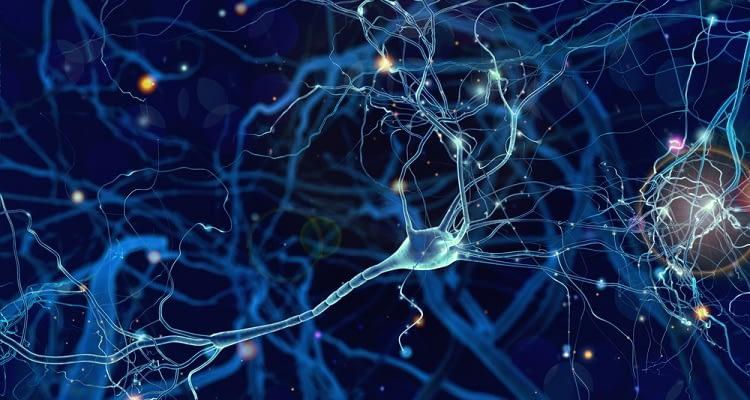 Sinirbilimciler ilk kapsamlı beyin hücreleri atlasını yayınladılar!