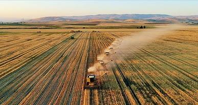 Düzce tarım ürünleri neler? Düzce'de hangi ürünler yetişir?