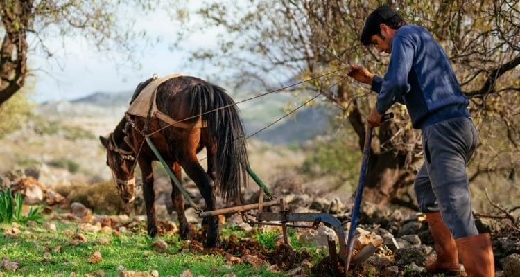 """AB: Türkiye'nin tarım politikasında """"Geriye gidiş"""", gıda güvenliğinde """"sınırlı ilerleme"""" var"""
