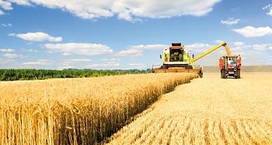 Türkiye'nin bitkisel üretimi arttı. Üretimi azalan ürünler hangileri?
