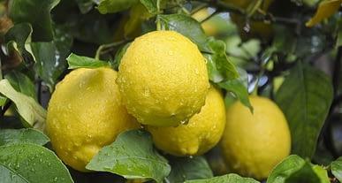 Limon şeker hastalığına nasıl etki eder? Limon şekeri yükseltir mi?