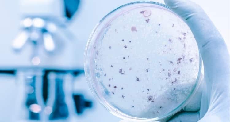 Unutulmuş bir uzay çağı teknolojisi, gıda üretiminde kullanılabilir mi?