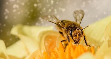 ABD Çevre Koruma Ajansı onay verdi: Bitkilere mantar ilacı arılardan!