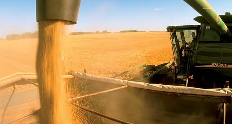 Bitkisel üretimde büyük azalış: Tahıl üretimi çift haneli düşecek
