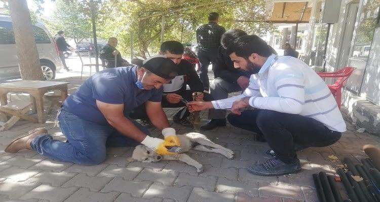 Elazığ'da yavru köpeğe araba çarptı! Kalp masajı hayatını kurtardı