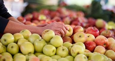 16 Ekim Dünya Gıda Günü: Tek yol, Gıdamıza Sahip Çıkmak!
