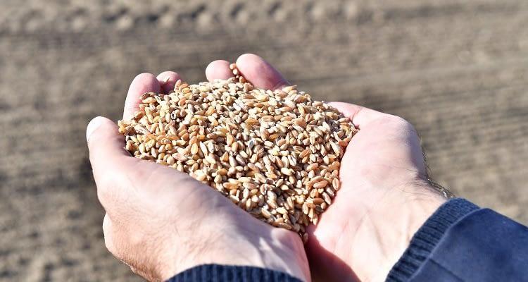 Tohumun İzinde Projesi tarımsal değerlerimizi koruyor